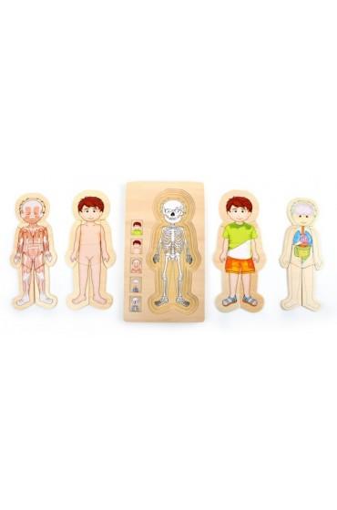 puzzle madera cuerpo humano